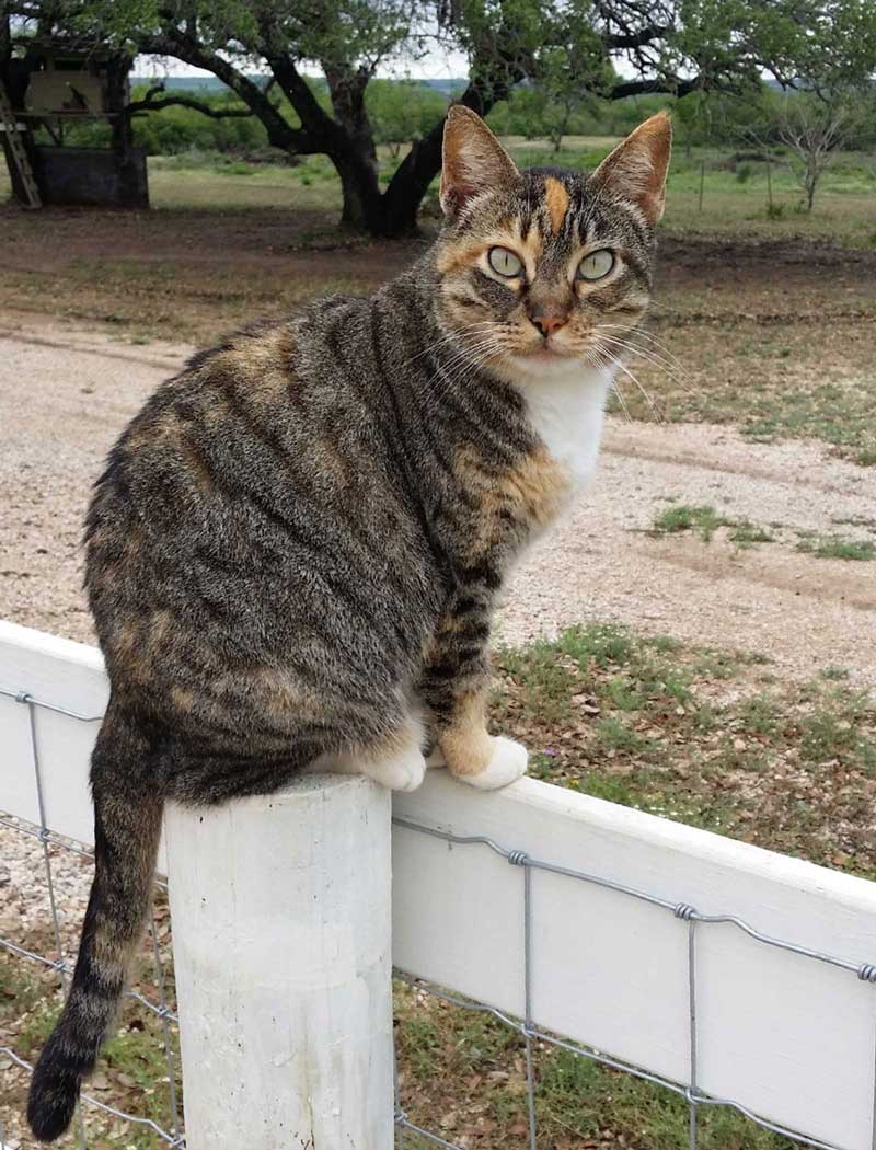meet-the-cats-Cleo-picaranch-texas