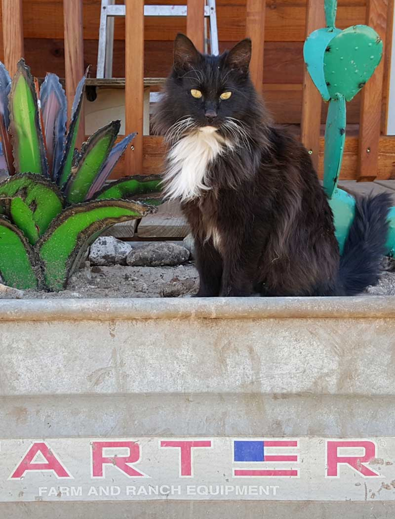 meet-the-cats-kit-picaranch-texas